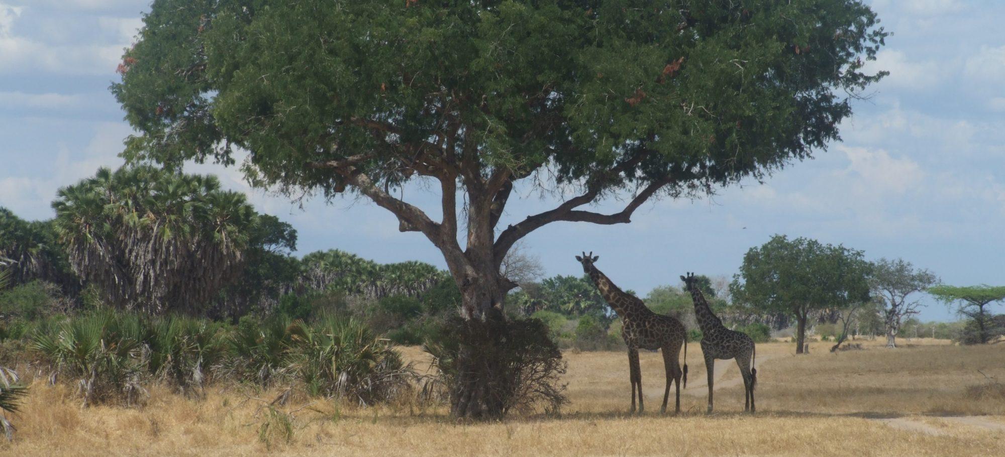 See Animals Wild