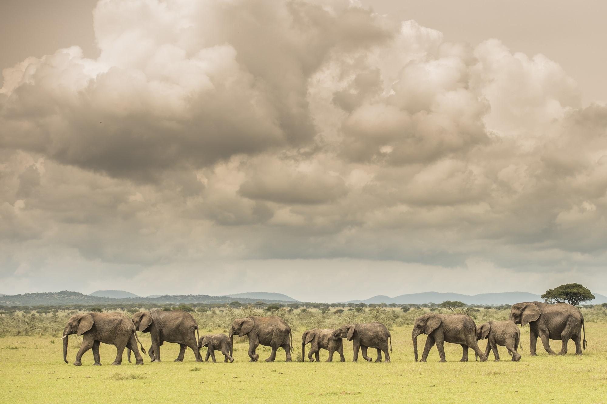 Singita-Serengeti-House-Wildlife1 resized
